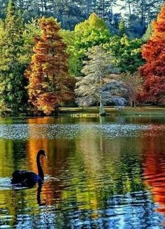 Peace is better than war Beauties to peak at peace Animals teach peace We're still fighting Amazing Beautiful lovely pictures Love Nature All Nature, Amazing Nature, Beautiful World, Beautiful Images, Beautiful Forest, Beautiful Birds, Belle Image Nature, Landscape Photography, Nature Photography