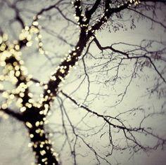 lit-up trees