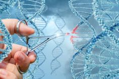 World Congress on Advanced Biomaterials and Tissue Engineering:  Gene Therapy : Genetherapy is an experimental tec...