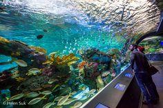 ripley's aquarium toronto, aquarium of canada