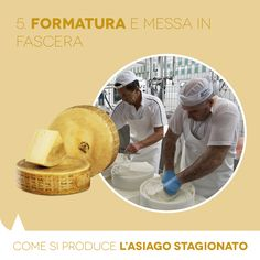 Aged PDO Asiago: how it is made. The moulding.