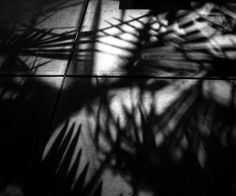 All sizes | palms | Flickr - Photo Sharing!