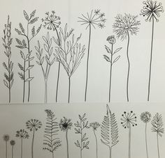 Line drawing of flower heads and seed heads sketchbook idea by Lizzie Reakes