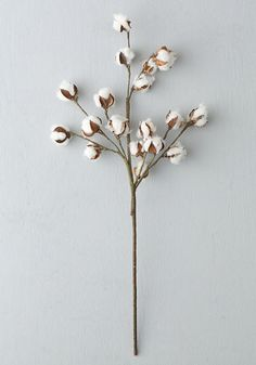 http://greenweddingshoes.com/product/dried-cotton-stem/ $10.00 :