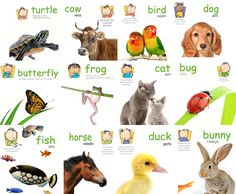 Animal Signs Poster Pack Baby Signs® Printable Poster Pack with 12 animal signs: Dog, Cat, Bird, Fish, Duck, Frog, Horse, Cow, Bug, Turtle, Butterfly, and Bunny.  Poster Packs are Spanish Inclusive!