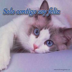 Imágenes de amor con gatitos lindos contigo soy feliz