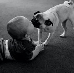 lovely baby was kissing pug