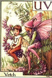 Vetch Fairy by Cicely Mary Barker