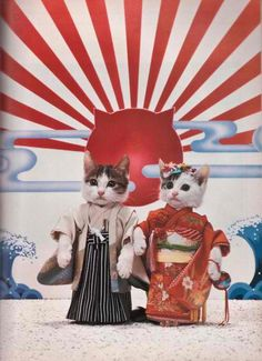 cats wearing kimonos!
