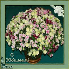 Юбилей анимационные открытки 3 - clipartis Jimdo-Page! Скачать бесплатно фото, картинки, обои, рисунки, иконки, клипарты, шаблоны, открытки, анимашки, рамки, орнаменты, бэкграунды Beautiful Roses, Floral Wreath, Happy Birthday, Animation, Wreaths, Flowers, Glitters, Hearts, Graphics