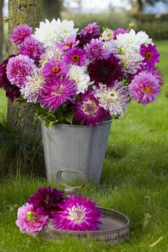 Dahlia Rose Mix from Longfield Gardens - Year of the Dahlia - National Garden Bureau Summer Flowers, Purple Flowers, Beautiful Flowers, Beautiful Love Pictures, Summer Bulbs, Growing Dahlias, Corporate Flowers, Dahlia Flower, Bulb Flowers