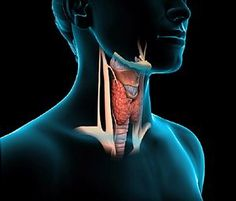 Skin conditions associated with thyroid hormone are common. In fact, thyroid hormone is actually an important regulator in the homeostasis of the epidermal. Thyroid Gland, Thyroid Hormone, Thyroid Disease, Thyroid Health, Low Thyroid, Hypothyroidism Diet, Anti Inflammatory Herbs, Underactive Thyroid, Thyroid Problems