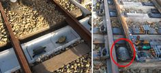 السلحفاة، إنكماش، إلى داخل، اليابان