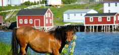 Change Islands Newfoundland Pony Sanctuary   Aviva Community Fund