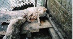 Boycott S. Korea until they stop the torturing and eating companion animals