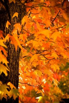Shades of Orange ~ Autumn