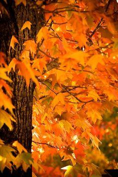 Shades of Orange ~ Autumn