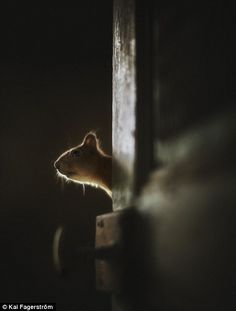 Mr Fagerström said he felt as though the past 'lingered in the corner' when he visited the house,much like this tiny mouse who he found ther...