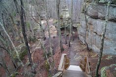 At about two miles into the hike, you will reach stairs that take you down about 80 feet to Courthouse Rock, where the Auxier Ridge Trail ends. Red River Gorge, Hiking Trails, Places To See, Kentucky, Paths, Most Beautiful, Arch, Stairs, House Styles
