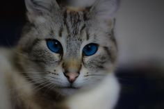 Fripon le Chat
