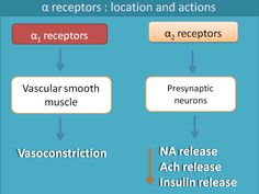Beta receptors play pathological role in many of cardiovascular disorders. Learn here how beta blockers act in these situations. Pa School, Medical School, Alpha And Beta Receptors, Alpha Blocker, Adrenergic Receptors, Beta Blockers, Autonomic Nervous System, Pharmacology Nursing, Pediatric Nursing