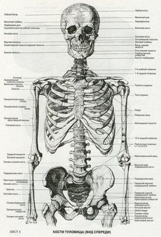 Trendy Ideas For Science Art Medical Anatomy Reference, Drawing Reference, Umibe No Onnanoko, Skeleton Anatomy, Skeleton Drawings, Human Anatomy Drawing, Anatomy Sketches, Medical Anatomy, Anatomy For Artists