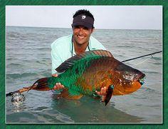 santiago seeber with a pound parrot fish Parrot Fish, Parrot Pet, Parrot Toys, Sea Fishing, Gone Fishing, Fishing Tackle, Fishing Tips, Fishing Lures, Colorful Parrots
