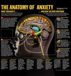 Anatomy of anxiety, including goings-on in both the body and brain. Like most powerful states, anxiety is a total mind-body experience!