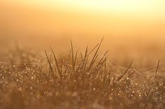 trawa, wschód słońca