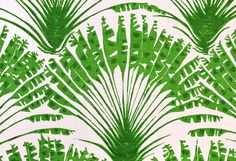 Christopher Farr paper...This could be really cool in the right place...love palm trees.