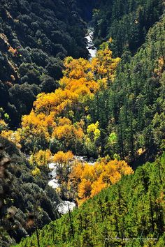 Autumn colors in Daocheng, Sichuan, China  (四川省稻城縣俄初山)