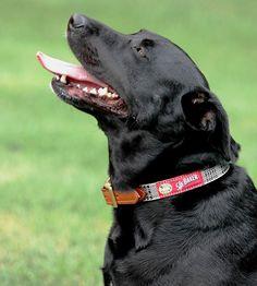 #Bakerdog leather trim collar - so handsome!  www.bakerblanket.com #barndog