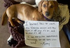 23 Reasons Why Dachshunds Are The Undisputed Champions of Dogshaming - BarkPost
