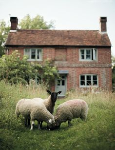 Walnuts Farm cottage sheep field country england (With images) Farm Cottage, Cottage Style, Welsh Cottage, Country Cottage Garden, Rustic Cottage, Cottage House, Farm House, Sheep And Lamb, Sheep Farm