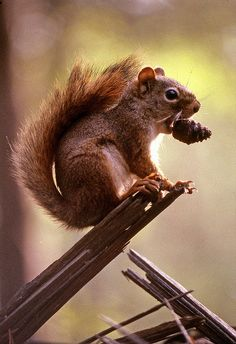 Squirrel #Animal #Wildworld #Discovery