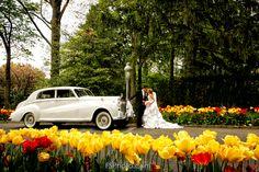 Wedding Photography - Beautiful Flowers Beautiful Flowers, Wedding Photography, Wedding Shot, Pretty Flowers, Bridal Photography, Wedding Photos