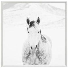 Pottery Barn Winter White Horse by Jennifer Meyers ($399) ❤ liked on Polyvore featuring home, home decor, wall art, horse home decor, black and white home decor, inspirational home decor, black white wall art and black and white wall art