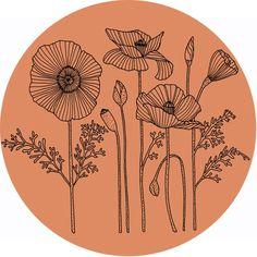 Poppies 3