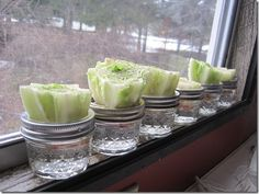 Here's an idea to stretch your grocery money and grow your own, organically. Re-growing veggies doesn't cost a dime. It's easy to cut off the bottom, re-root and grow your own lettuce, celery, green onions, bok choy, garlic, ginger, basil, potatoes & carrots. If you can think of another veggie to grow this way, please share. Let us know if you've tried this and how well it worked!