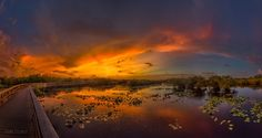 Anhinga Trail by Frank Delargy  #awesome #amazing #cool #colors #golden #magic #mystic #dream #dreamer #lit #life #live #love #light #idyll #imagine #infinity #inspired #inspiration #harmony #serenity #follow #photoftheday #wow #ty #sun #fire #sunrays #sunset by edwardgustavson