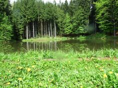 Pond in the forests in east Bohemia, close village Dolní Dobrouč