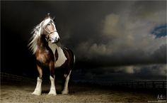 coloured_horse_photograph