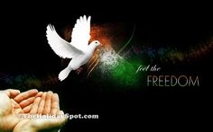 every 1 is like this bird who are free with peace and freedom and mostly with wisdom Independence Day Pictures, Happy Independence Day India, Independence Day Wallpaper, 4k Wallpaper For Mobile, The Freedom, Life Is Good, Cool Pictures, Feelings, Wisdom