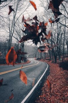 I live for fall aesthetics! This gorgeous red and brown landscape is absolutely breathtaking, and how cool are the falling leaves in the photograph. Fall Pictures, Fall Photos, Beautiful Places, Beautiful Pictures, Autumn Aesthetic, Autumn Cozy, Fall Wallpaper, Autumn Photography, Autumn Inspiration