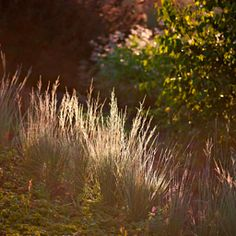 Magda Wasiczek / Collection_collection_arboretum-trojan-w-lato Photography Portfolio, Fine Art Photography, Ornamental Grasses, Herbs, Gallery, Flowers, Plants, Summer, Collection