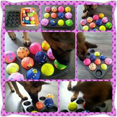 Brain Games for Dogs Diy Dog Toys, Best Dog Toys, Pet Toys, Brain Games For Dogs, Dog Games, Dog Boredom, Dog Enrichment, Daisy Dog, Dog Puzzles