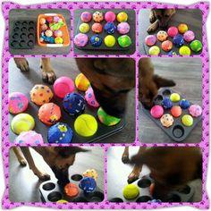 Spel 1  (hondenspel hond spel denkwerk hersenwerk brain dog game play diy) www.facebook.com/denkspellenvoorjehond