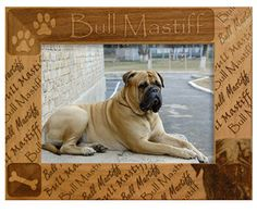 Dog Breed Photo Frame - Bullmastiff