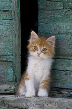 Kitten Sitting In Barn Door