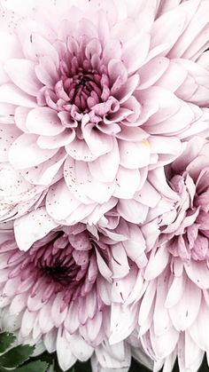 Excellent Free of Charge Peonies fondo Strategies The peony is definitely outra. - Excellent Free of Charge Peonies fondo Strategies The peony is definitely outrageously beautiful i - My Flower, Flower Power, Pink Flowers, Beautiful Flowers, Summer Flowers, Cactus Flower, Exotic Flowers, Yellow Roses, Pink Roses